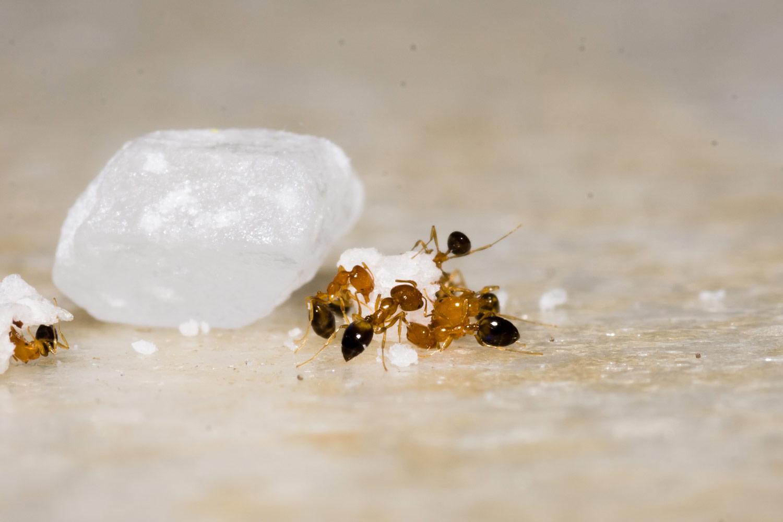 Die Ameisen-Company Märchen für Erwachsene Susanne Zumbühl