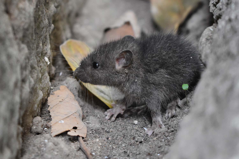 Molli die kleine Maus Märchen für Erwachsene Susanne Zumbühl